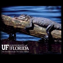 UF Training Gator
